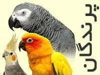 دسته بندی پرندگان