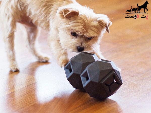 بازی کردن توله سگ در زمان تنهایی