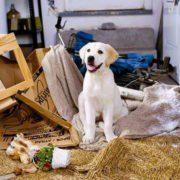 تنها گذاشتن سگ در خانه و خرابکاری