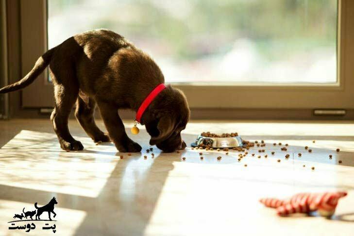 مقدار-غذای-توله-سگ