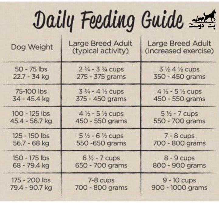 مقدار-غذای-سگ-دوبرمن