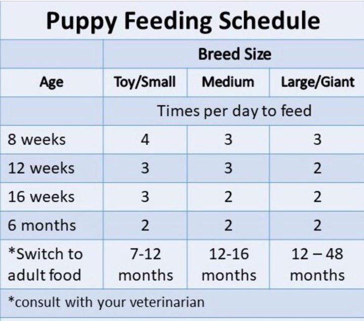 مقدار-غذای-سگ-پامرانین