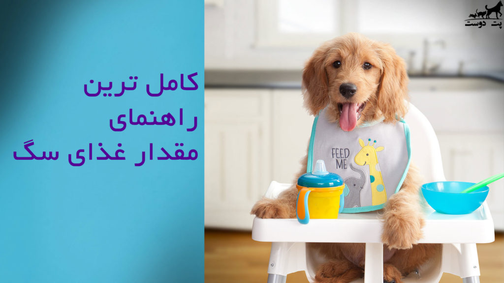 راهنمای-مقدار-غذای-سگ