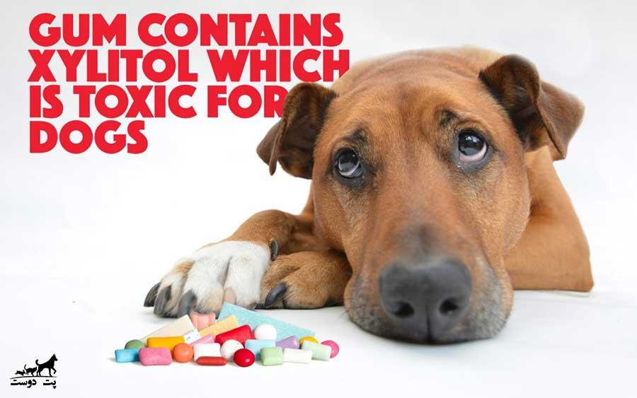 آبنبات-آدامس-و-انواع-شیرین-کننده-ها-برای-سگ