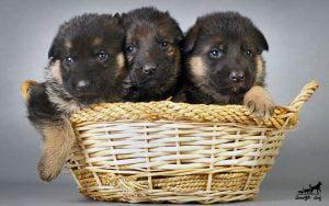 آوردن-حیوانات-جدید-به-خانه