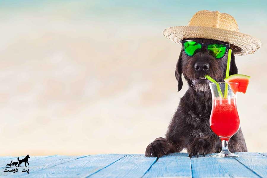 الکل-برای-سگ