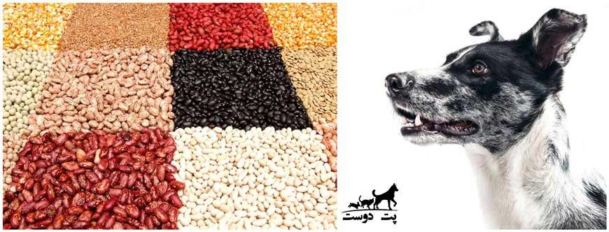 حبوبات-برای-سگ