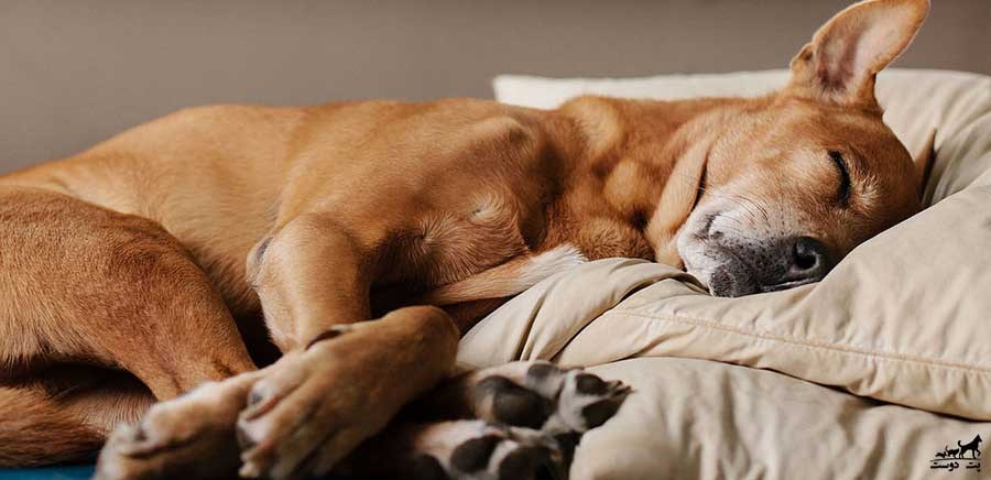 سگ-آرام-در-شب