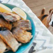 غذاهای-ممنوعه-سگ