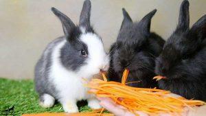 غذای-خرگوش-چیست؟