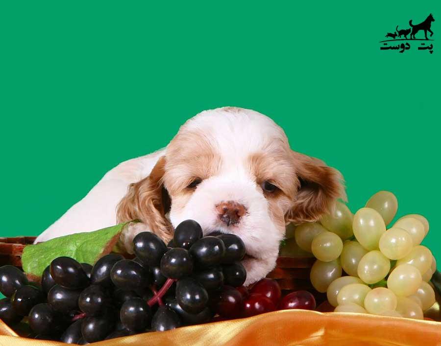میوه-های-ممنوعه-برای-سگ