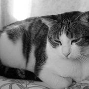 افسردگی-گربه