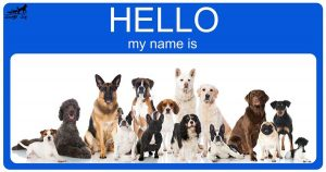 انتخاب-اسم-سگ