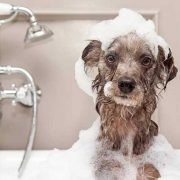 شستن-سگ