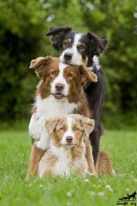 آموزش-نشستن-به-سگ