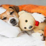 سرماخوردگی-سگ-ها