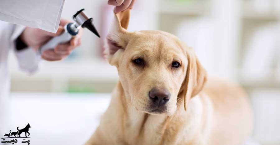عفونت-گوش-سگ