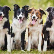 اجتماعی-کردن-سگ
