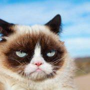 ایرادات-رفتاری-گربه