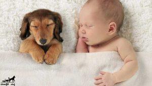 ترس-از-سگ-ها