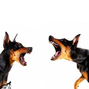 جلوگیری-از-پارس-سگ