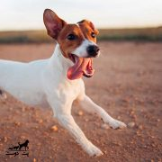 خوشحال-کردن-سگ-ها