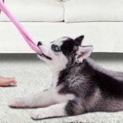 دزدی-کردن-سگ-ها