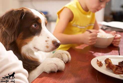 سگ-هایی-که-اشیا-را-می-دزدند