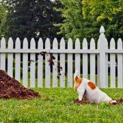 فرار-کردن-سگ-ها-از-حیاط