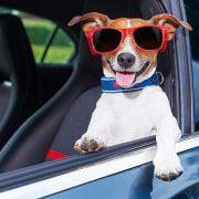 مراقبت-از-سگ-ها-در-ماشین