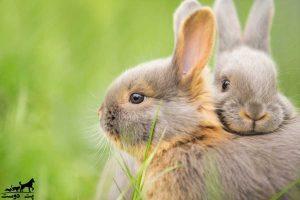 نگهداری-خرگوش