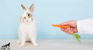 هویج-برای-خرگوش