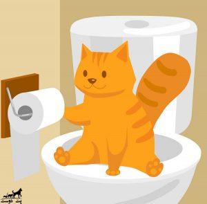اسهال-گربه