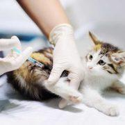 بیماری-گربه