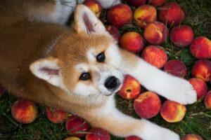 خوراکی-های-سالم-برای-سگ-ها