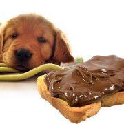 شکلات-برای-سگ-ها