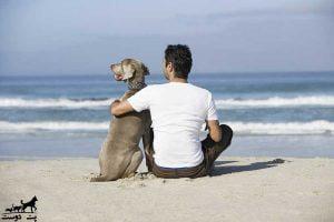 مزایای-زندگی-با-حیوانات-خانگی