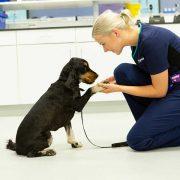 مسمومیت-سگ-ها