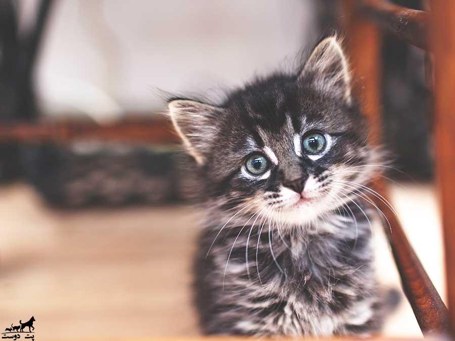 مهم-ترین-نکته-برای-نگهداری-گربه