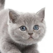 نگهداری-گربه