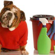 وسایل-خطرناک-برای-حیوانات-خانگی
