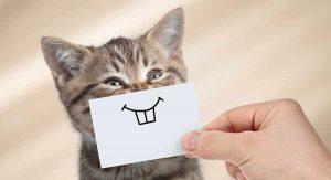 گربه-شاد
