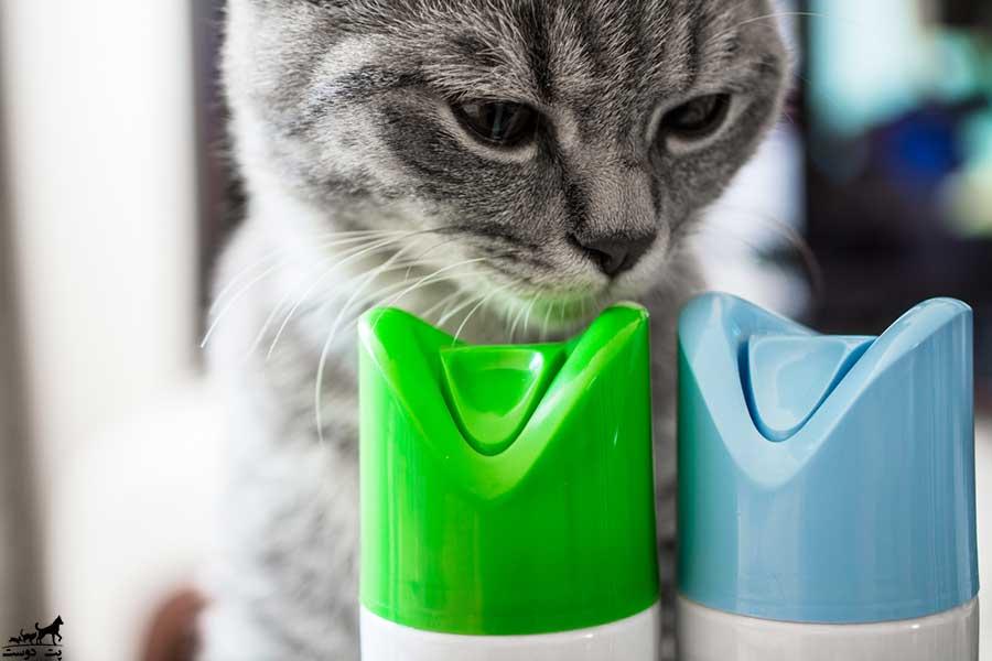 عوامل-مسموم-کننده-گربه-ها