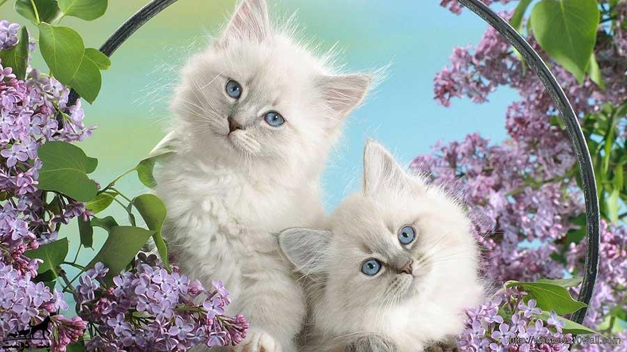 مسمومیت-گربه