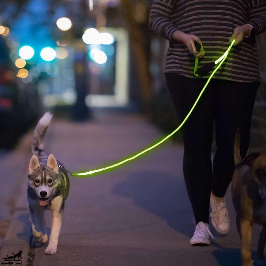 پیاده-روی-با-سگ-در-شب