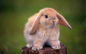 آرام-کردن-خرگوش