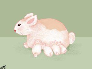 تشخیص-حاملگی-خرگوش