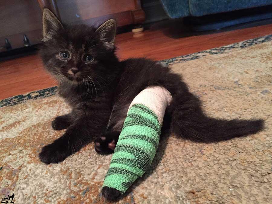 شکستگی-پای-گربه