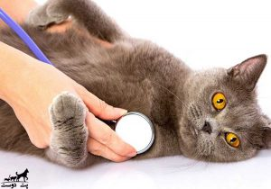عقیم-سازی-گربه-نر