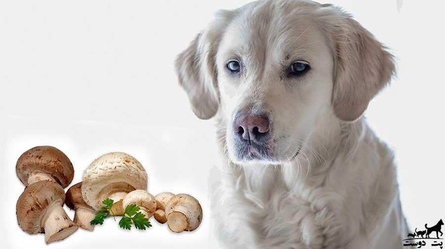 قارچ-برای-سگ